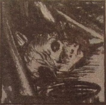 Steele: Skull in cellar crypt (Shoscombe Old Place)